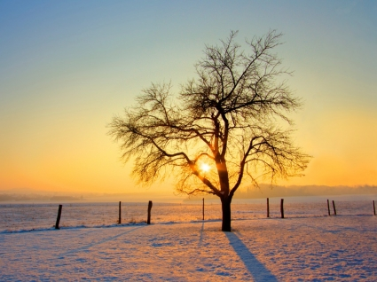 Cold Morning Wallpaper Winter Nature