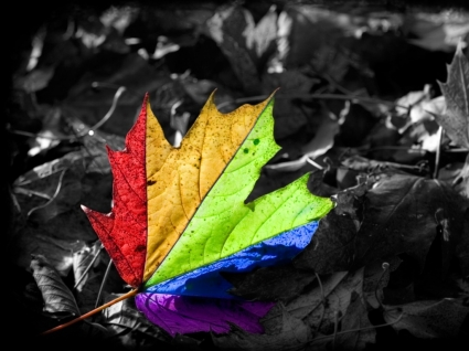 Colors make a difference Wallpaper Miscellaneous Other