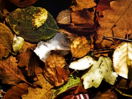 Colors of fall Wallpaper Autumn Nature