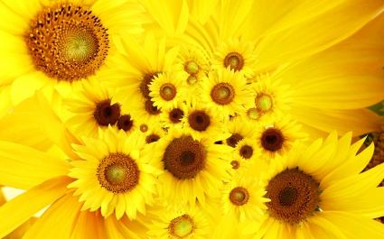 Cool Sunflowers