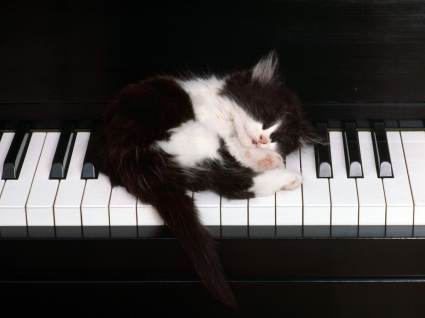 Cute kitty Wallpaper Cats Animals