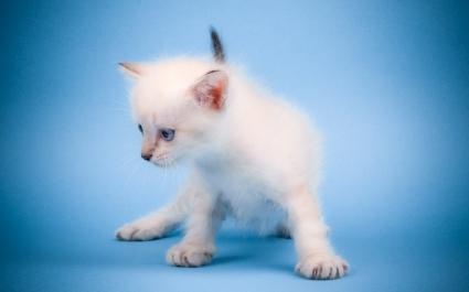 Cute Mew Mew Cat