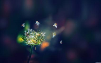 Dandelion Flies