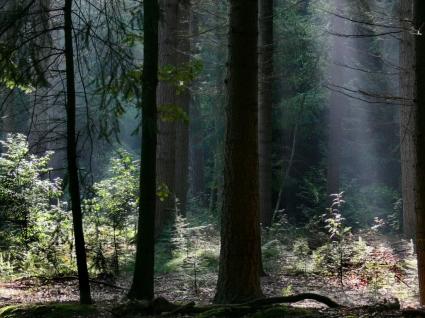 Dark Forest Wallpaper Landscape Nature