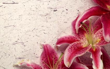 Decor Lily