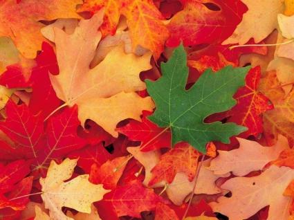 Dixie National Forest Utah Wallpaper Autumn Nature
