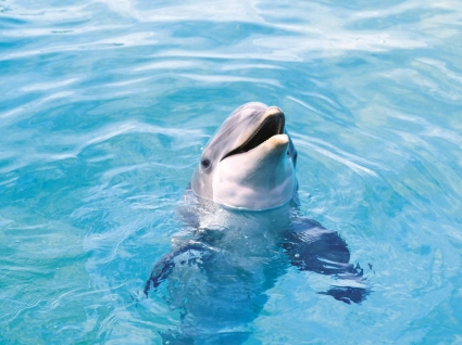 dolphin wallpaper dolphins animals wallpapers in jpg format for free