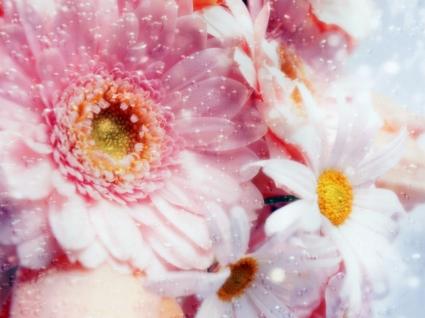 Dreams Pink Flowers Wallpaper Flowers Nature