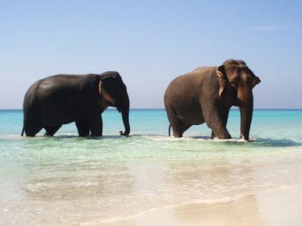 Elephants in Paradise Wallpaper Elephants Animals