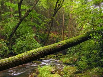Fallen Tree Wallpaper Landscape Nature