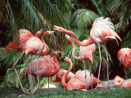 Flamingo Fun Wallpaper Birds Animals