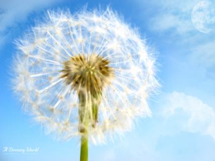 Flower Dreamy World