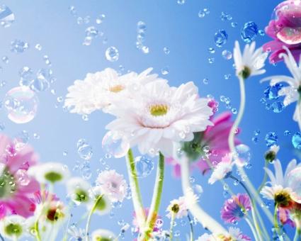 Flower Drops Sky