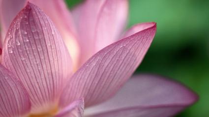 Flower Pink 1080p HD