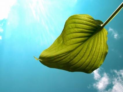 Flying Leaf Wallpaper Other Nature
