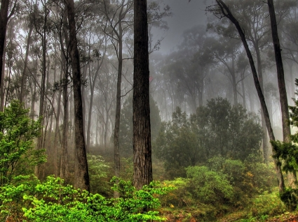 Forest Landscape Wallpaper Landscape Nature