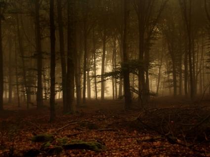 Forest Of Fog Wallpaper Landscape Nature