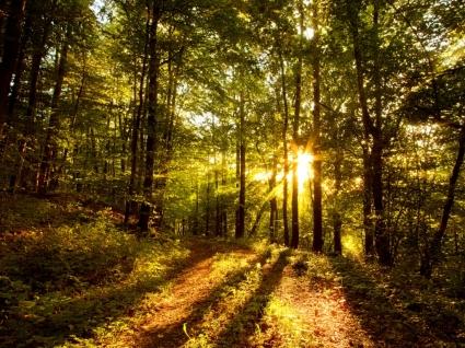 Forest Sun Wallpaper Landscape Nature