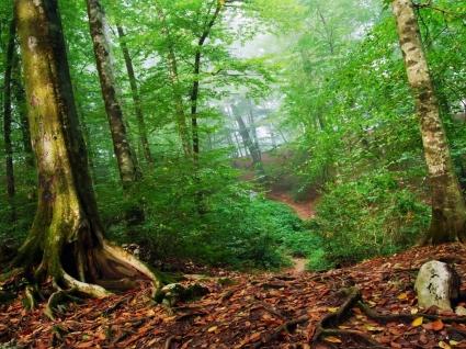 Forest Wallpaper Landscape Nature
