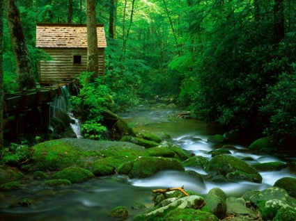 Forest Watermill Wallpaper Rivers Nature