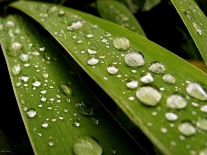 Fresh Rain Drops Wallpaper Plants Nature