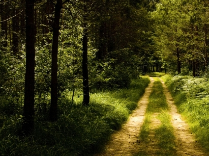 Germany Forest Road Wallpaper Landscape Nature