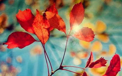 Glare of Autumn