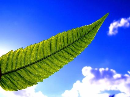 Green in Blue Sky