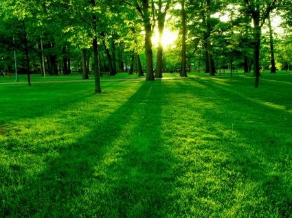 Green Park Wallpaper Landscape Nature