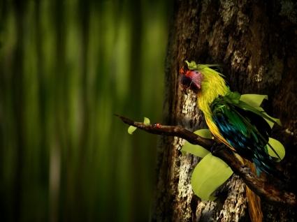 Guara Wallpaper Parrots Animals