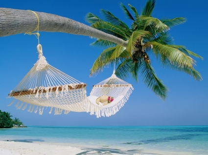 Hammock Wallpaper Beaches Nature