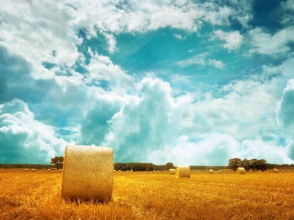 Hay Field Wallpaper Landscape Nature