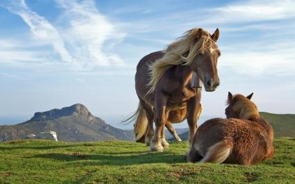 Hill Horses