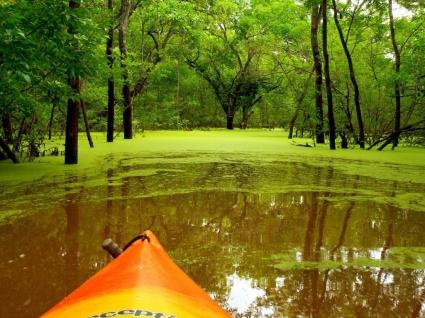 Into the Green Wallpaper Landscape Nature