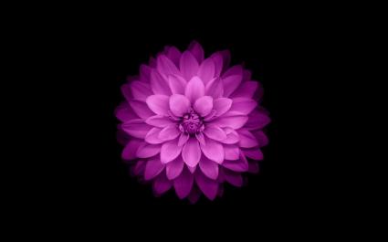 iPhone Flower
