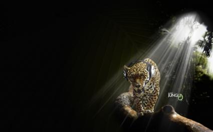 Jaguar in Audio Jungle