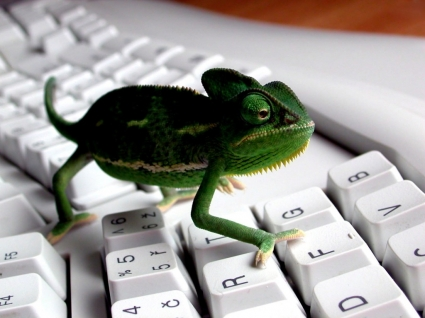keyboard Lizard Wallpaper 3D Characters 3D