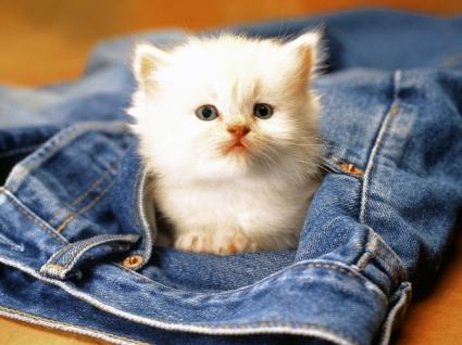 Kitty Wallpaper Cats Animals