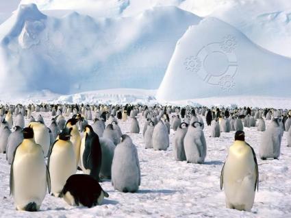 Kubuntu penguins Wallpaper Linux Computers Wallpapers in jpg