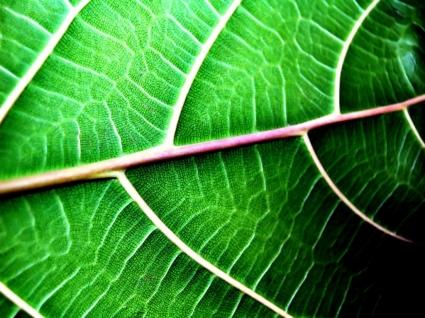 Leaf structure Wallpaper Plants Nature