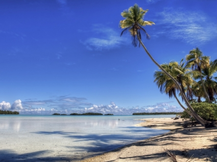 Leaning Palm Wallpaper Beaches Nature