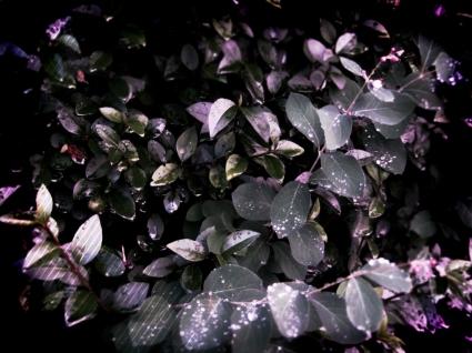 Leaves purple effect Wallpaper Autumn Nature