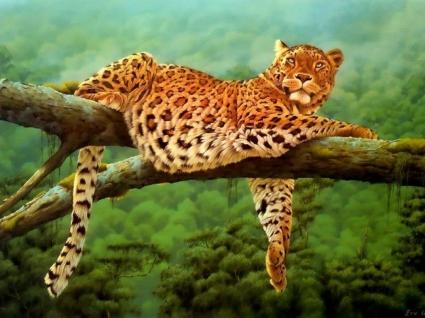 Leoparden Leopard