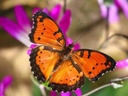 London Butterfly House
