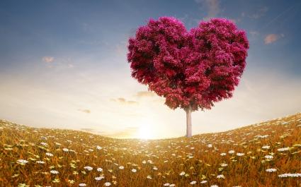 Love Heart Tree Fields