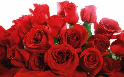 Lovely Red Roses