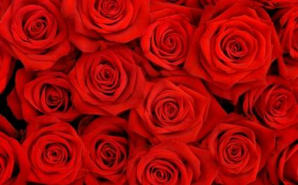 Lovely Roses HQ