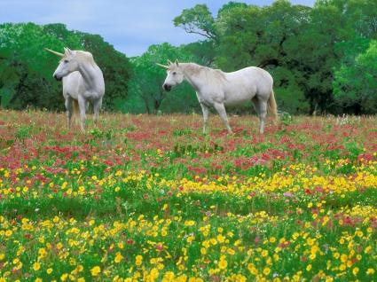 Magic Horses