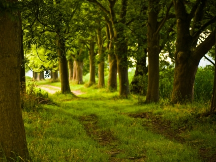 Magical Forest Wallpaper Landscape Nature