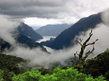 Mist Wallpaper Landscape Nature